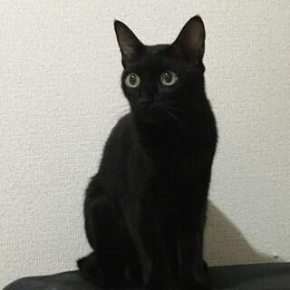 好奇心旺盛で優しい黒猫