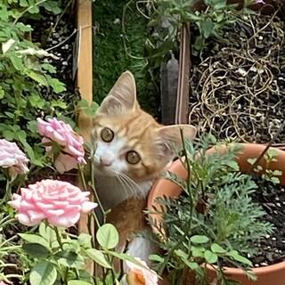 お庭に遊びに来るクリームパン色の子猫2匹