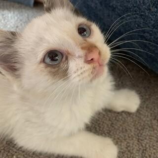 子猫生後1〜2ヶ月です