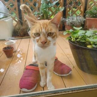 【地域猫】人間大好き、甘えん坊