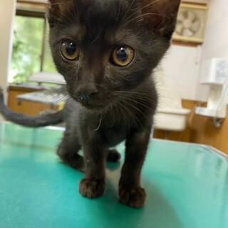 やっぱり人気の黒猫ちゃん♡らいくん