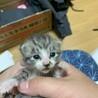 生後3〜5日 健康な子猫の里親様を募集します