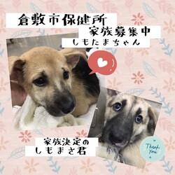 「どーんと家族募集中の倉敷の子犬達→全頭譲渡決定!」サムネイル1