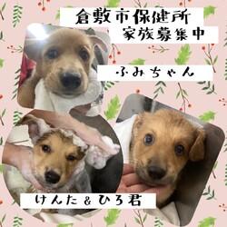「どーんと家族募集中の倉敷の子犬達→全頭譲渡決定!」サムネイル3