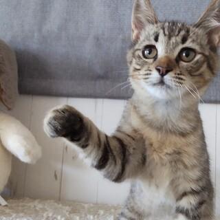 人馴れ抜群☆超甘えん坊♡人も猫も大好き