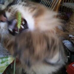 「リアル猫じゃらしの反応は?」サムネイル2