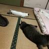 ネコ 落ちてます。。。。夫 爆睡中。。。。