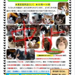 中止決定【要予約】子猫の譲渡会 サムネイル1