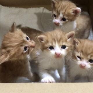 半長毛?の子猫4匹里親募集