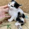 超フレンドリーな可愛いい三毛猫ちゃん❣️ミミちゃん
