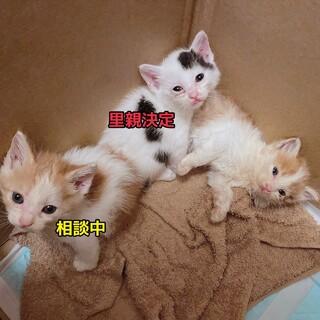 3匹の子猫ちゃん