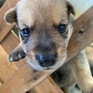 8月29日生まれ 子犬