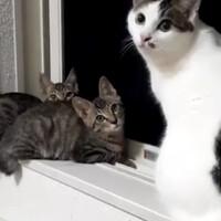2匹の可愛い三ヶ月兄妹子猫