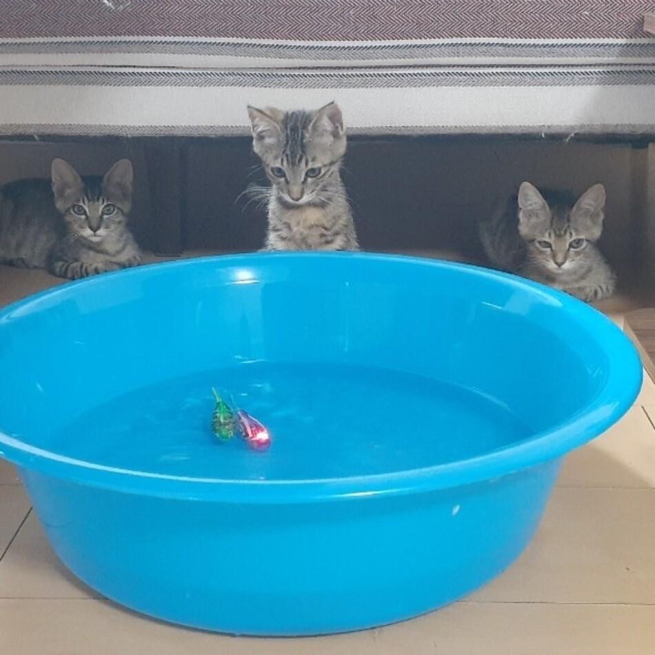 2匹の可愛い三ヶ月兄妹子猫のカバー写真