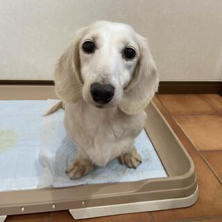 美犬な幸[ユキ]ちゃん⭐︎