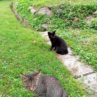 物置小屋で生まれた2匹のネコ。楽しく遊んでいます