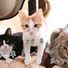 3匹の子猫の募集