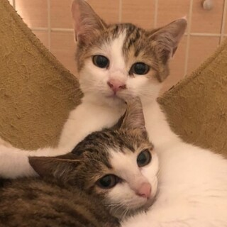 家猫修行中のキュートな姉妹子猫