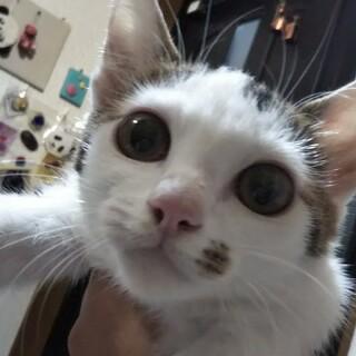 まんまるおめめと、口もとのほくろがキュートな♀子猫