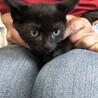 子猫の里親募集 黒2