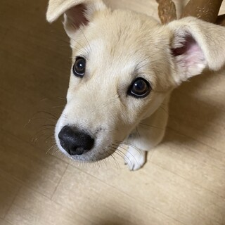 仔犬推定3ヶ月