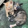 【急募】カワイイ3兄弟+1匹の子猫たち