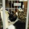 生後2か月の子猫達に素敵な出会いを!