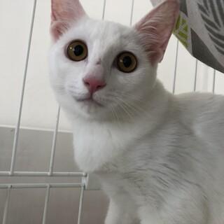 白猫シスターズ♡キティーちゃん♡