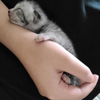 生まれてすぐの子猫、目はまだ開いていません。