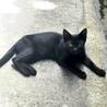 【生後3〜4ヶ月、健康状態◎】やさしい黒猫ちゃん♪