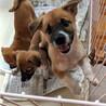 毎日元気いっぱいの3兄妹(2カ月・雑種子犬)です。