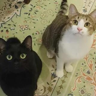 少し臆病だけどイケメンな黒猫とキジ白の兄弟