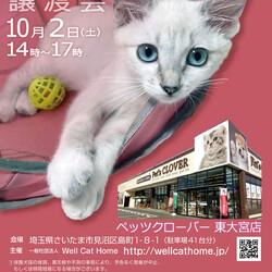 ペッツクローバー東大宮店「保護ネコ譲渡会」開催! サムネイル1