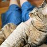 甘えたくてしょうがない♪膝乗り猫『トトリ』1歳 サムネイル4