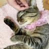 甘えたくてしょうがない♪膝乗り猫『トトリ』1歳 サムネイル6