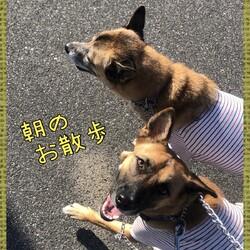 Edワンコ&Luluちゃんそして仲間たち朝のお散歩