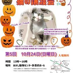 明石【譲渡会】猫まみれwithあかしっぽ 第5回