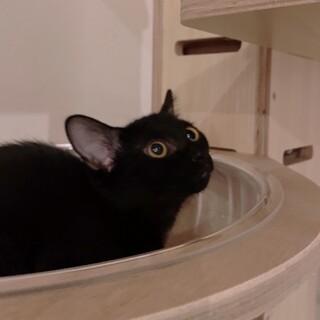 黒猫ジジくん生後3カ月 甘えん坊予備軍です