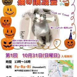 明石【譲渡会】猫まみれ with FuRaRi(ikawadani7) 第1回