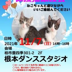 11/7(日)根本ダンススタジオ 保護猫譲渡会
