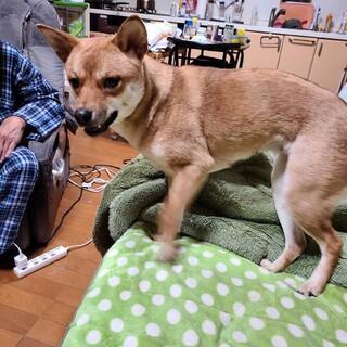 保護犬 雑種 仮名『めいちゃん』