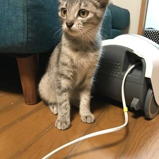 雑種 6ヶ月のメスの子猫