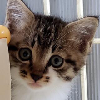 可愛い子猫、ぱっくん♪