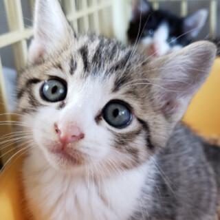 可愛い子猫、れんくん♪
