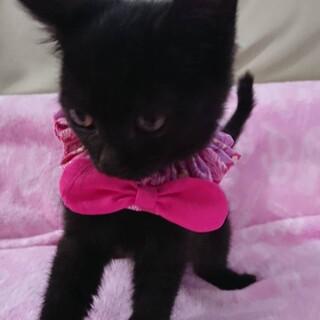 人が大好きな可愛い黒仔猫のスノちゃん!