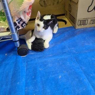 【保護猫】白黒の可愛い子猫ちゃん 4ヶ月~メス♀