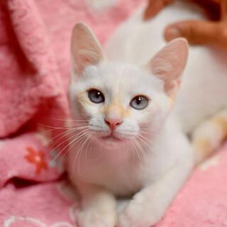 アイスブルーの目なトト!