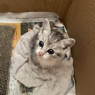 保護猫ちゃんの里親募集しております