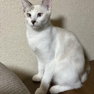 ツンデレ美猫☆ふうちゃん4ヶ月