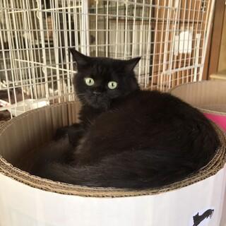 可愛らしい 黒猫りんちゃん